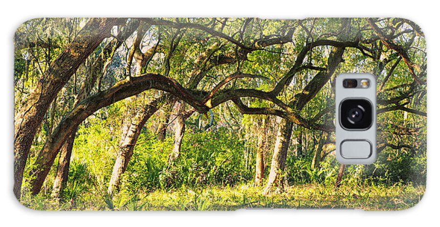 Beaufort County Galaxy S8 Case featuring the photograph Bent Trees by Phill Doherty