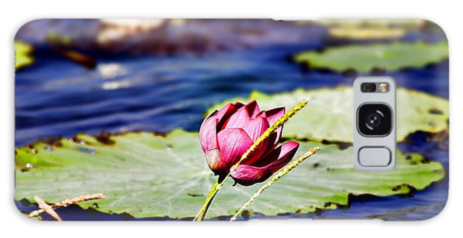 Lotus Flower Galaxy S8 Case featuring the photograph Billabong by Douglas Barnard
