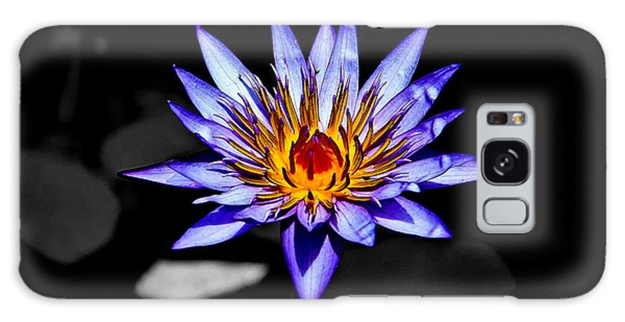 Flowers Galaxy S8 Case featuring the photograph Black Pond Lilly by Steve McKinzie