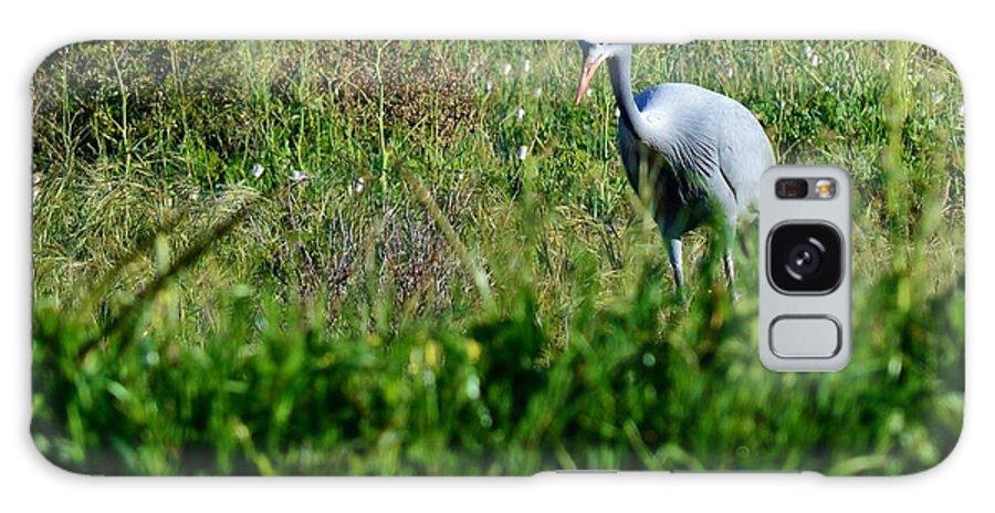 Blue Crane; Birds; Grasland; Nature; Farmland; Animal; Wings; Grey; Big; Galaxy S8 Case featuring the photograph Blue Crane by Werner Lehmann