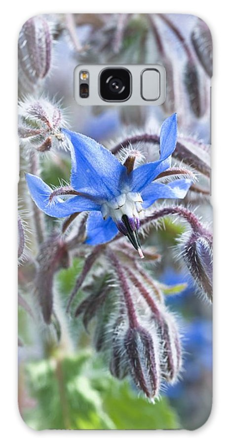 Borage Galaxy S8 Case featuring the photograph Borage (borago Officinalis) by Adrian Bicker