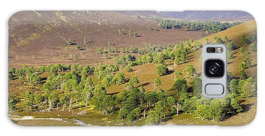 Scots Pine Galaxy S8 Case featuring the photograph Cleared Scots Pine Forest by Duncan Shaw