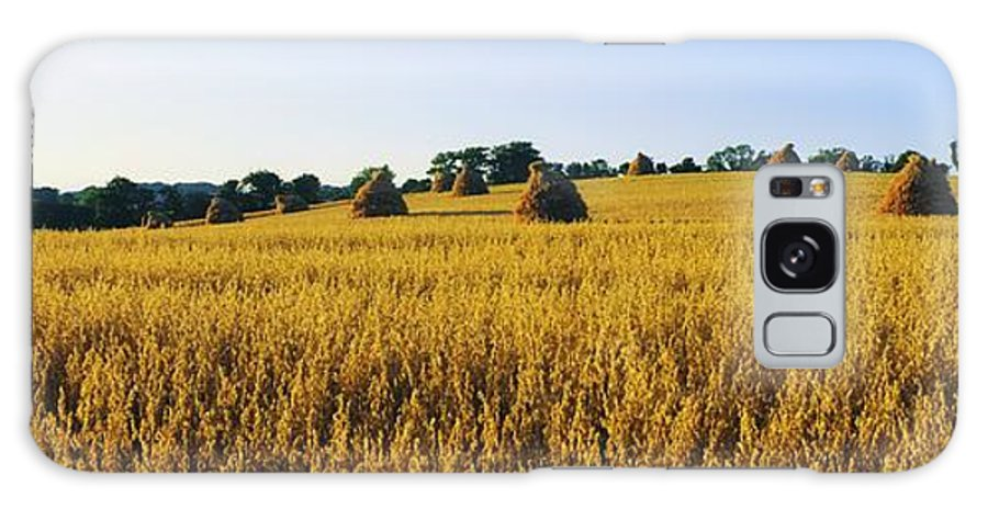 Beauty In Nature Galaxy S8 Case featuring the photograph Co Down, Ireland Oats by The Irish Image Collection