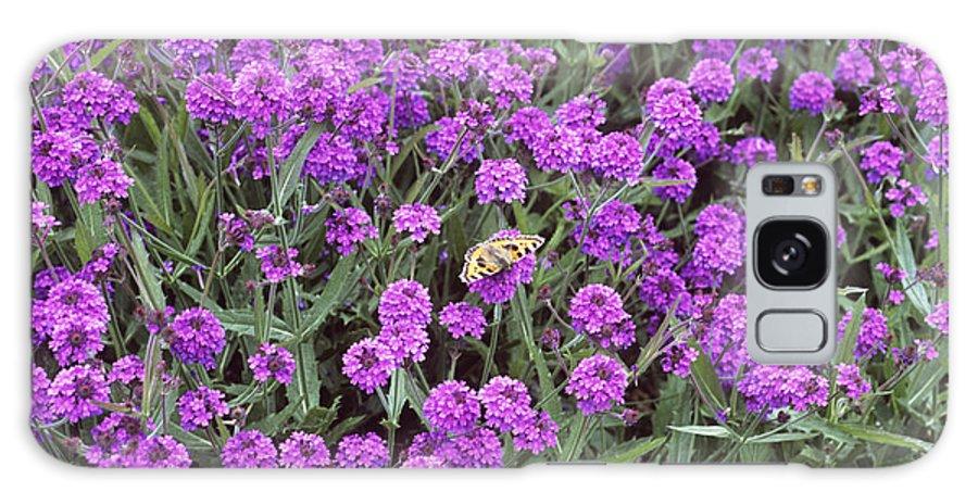 Lepidoptera Galaxy S8 Case featuring the photograph Coarse Verbena (verbena Rigida) by Adrian Thomas