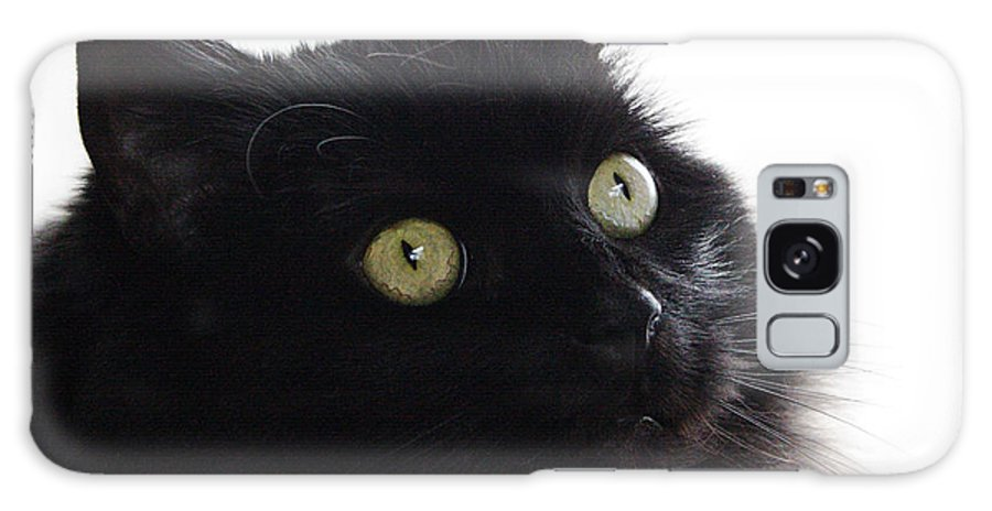 Cat Galaxy S8 Case featuring the photograph Coco by Jeff Galbraith