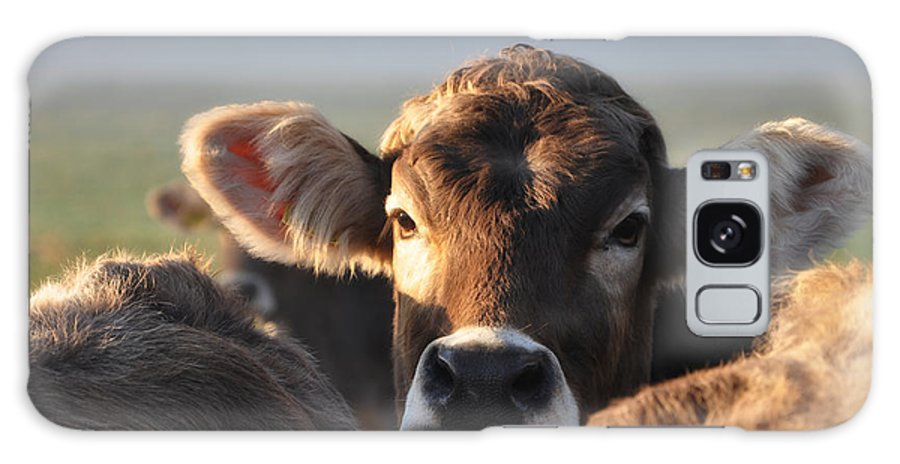 Cows Galaxy S8 Case featuring the photograph cow by Mats Silvan