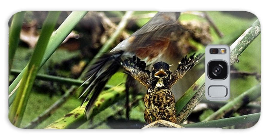 American Robin (turdus Migratorius) Galaxy S8 Case featuring the photograph Cry Of The American Robin. by James Ahn
