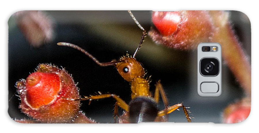 Ant Galaxy S8 Case featuring the photograph Curious Ant by Shannon Harrington