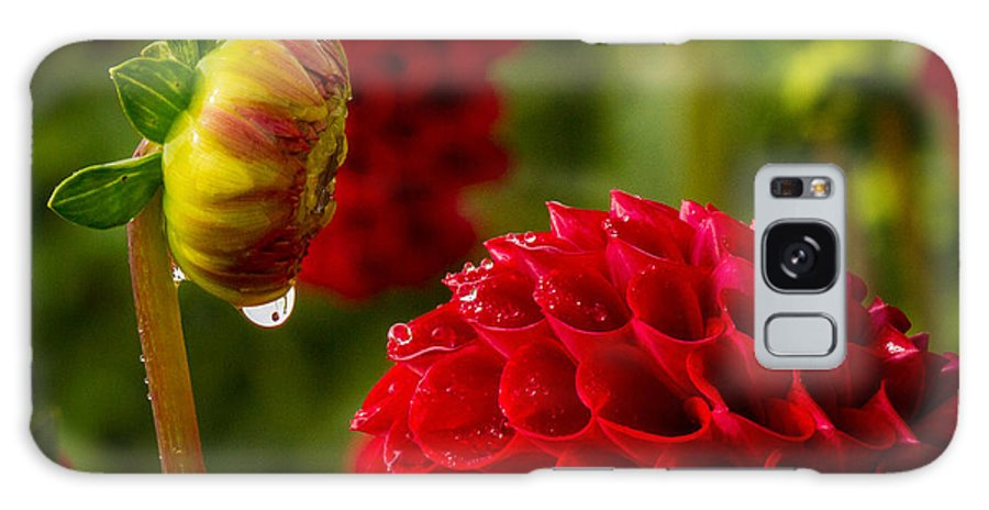 Dahlia Galaxy S8 Case featuring the photograph Dahlia Bud With Dew by Jean Noren