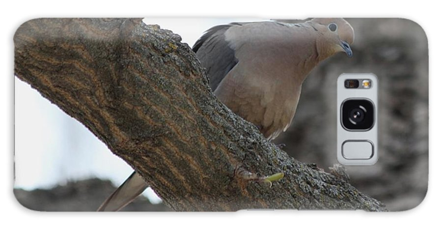 Dove Galaxy S8 Case featuring the photograph Dove by Lori Tordsen