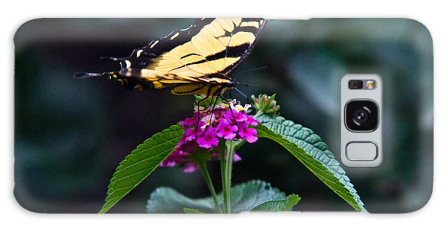 Eastern Galaxy S8 Case featuring the photograph Eastern Tiger Swallowtail 3 by Douglas Barnett