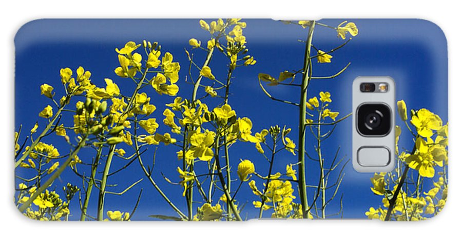 Worms-eye Galaxy S8 Case featuring the photograph Field Of Rape In Bloom. Auvergne. France. Europe by Bernard Jaubert