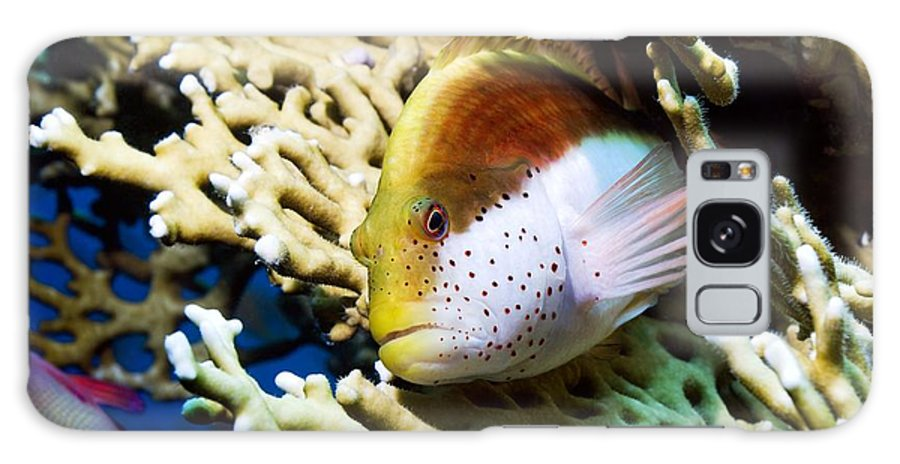 Freckled Hawkfish Galaxy S8 Case featuring the photograph Freckled Hawkfish by Georgette Douwma