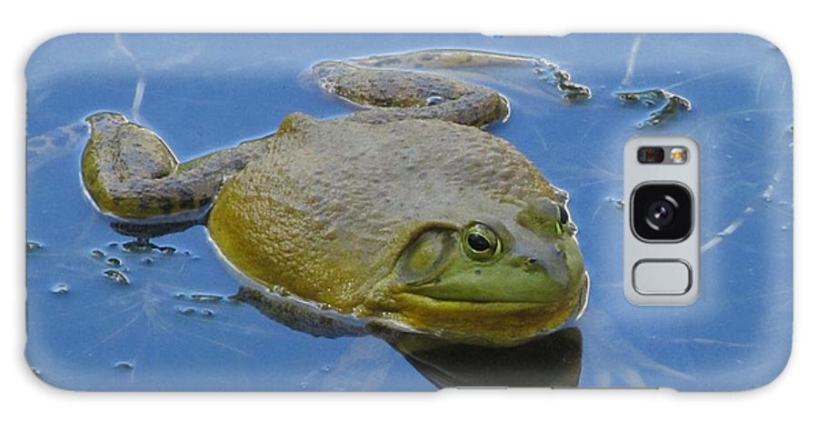 Nature Galaxy S8 Case featuring the photograph Frog In Pond by Jeannie Kohut