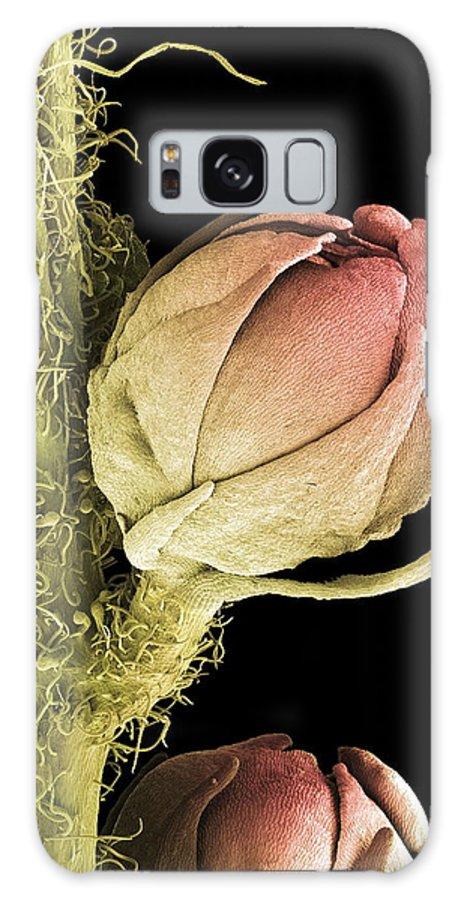 Biological Galaxy S8 Case featuring the photograph Goat's Beard Flower, Sem by Steve Gschmeissner