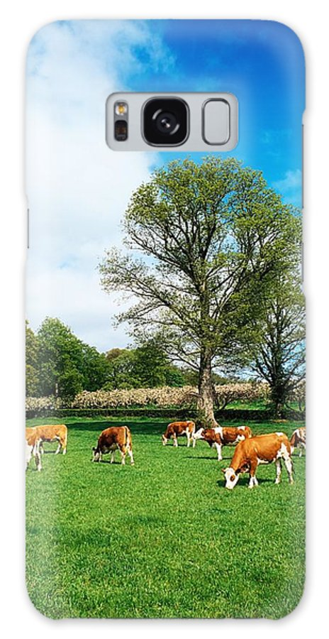 Bullock Galaxy S8 Case featuring the photograph Hereford Bullocks by The Irish Image Collection