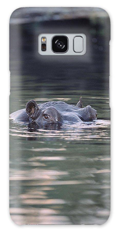 Hippopotamus Amphibius Galaxy S8 Case featuring the photograph Hippopotamus In Water by Tony Camacho