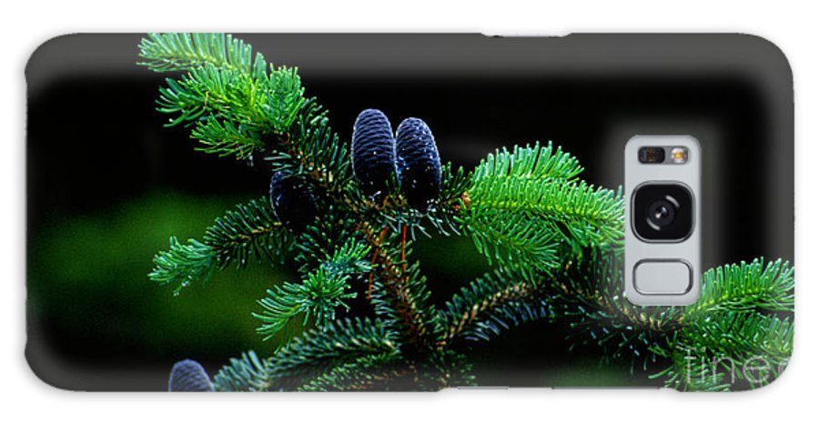Pine Cones Galaxy S8 Case featuring the photograph Mountain Life by Sharon Elliott