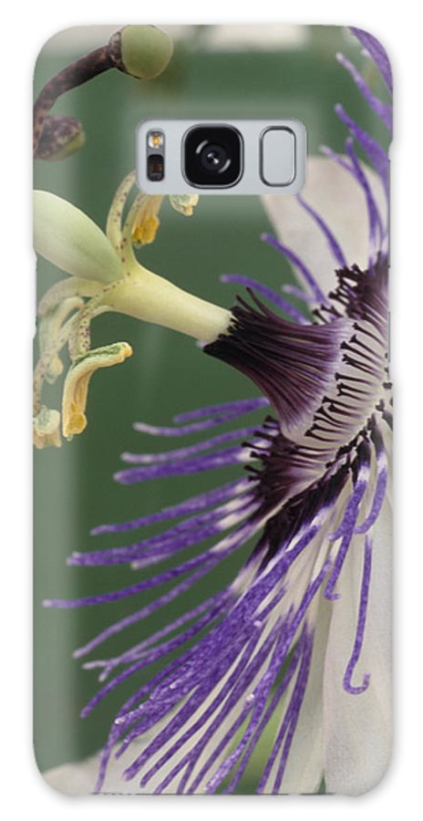 Passiflora 'venus' Galaxy S8 Case featuring the photograph Passion Flower by Archie Young