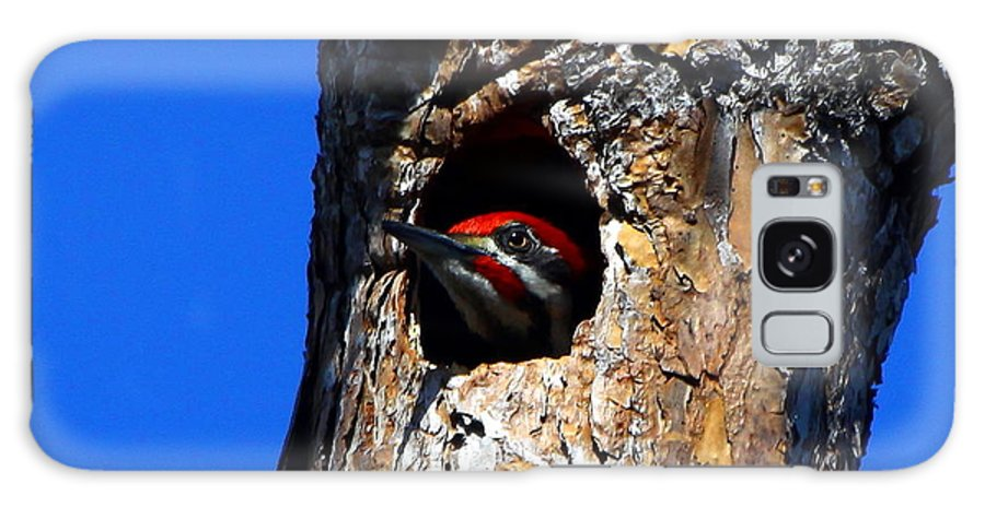 Pileated Woodpecker Galaxy S8 Case featuring the photograph Peeking Out by Barbara Bowen