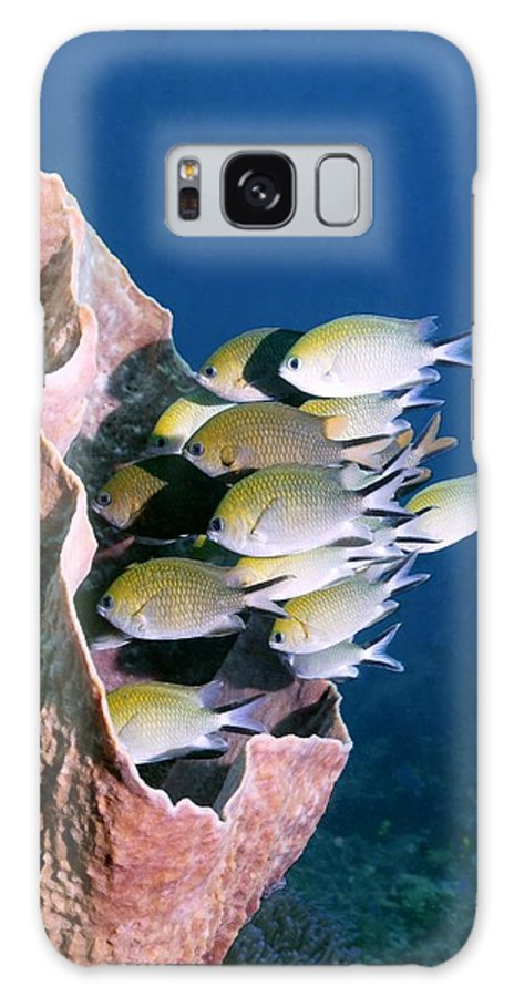 Chromis Scotochiloptera Galaxy S8 Case featuring the photograph Philippines Chromis by Georgette Douwma