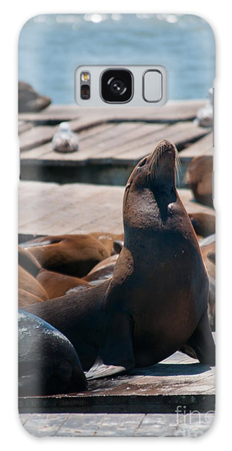 Animals Galaxy S8 Case featuring the digital art Pier 39 San Francisco by Carol Ailles