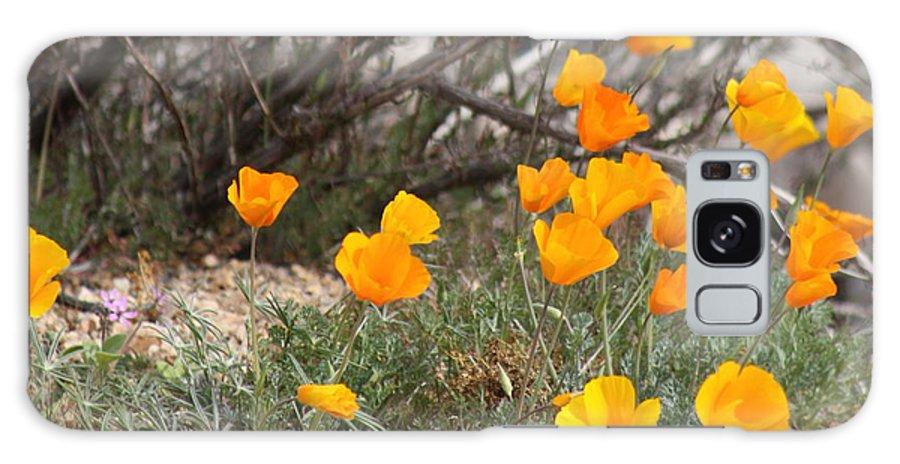 Poppies Galaxy S8 Case featuring the photograph Poppies by Kim Galluzzo Wozniak