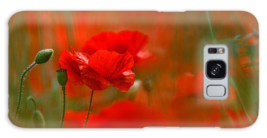 Poppy Galaxy S8 Case featuring the photograph Poppy Flowers 02 by Nailia Schwarz
