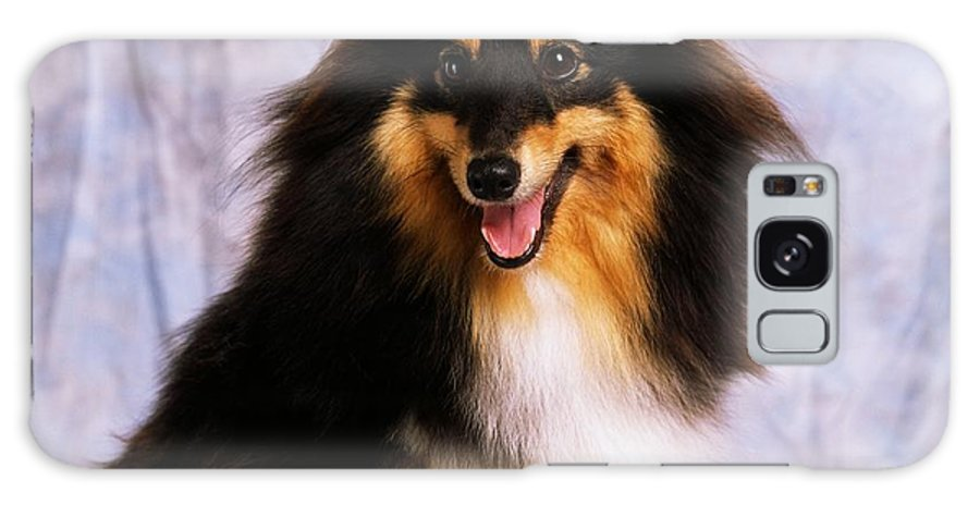 Color Galaxy S8 Case featuring the photograph Shetland Sheepdog Portrait Of A Dog by The Irish Image Collection