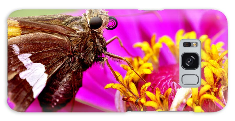Silver-spotted Skipper Galaxy S8 Case featuring the photograph Skipper On Zinnia by Thomas R Fletcher