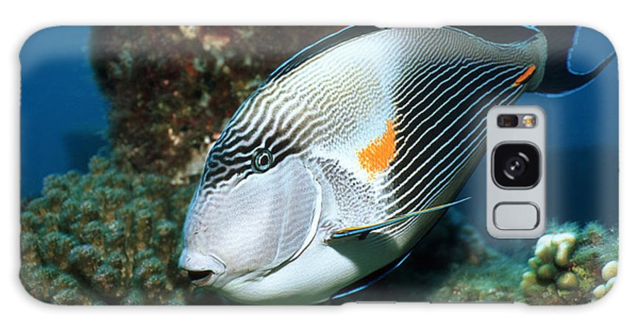 Acanthurus Sohal Galaxy S8 Case featuring the photograph Sohal Surgeonfish by Georgette Douwma
