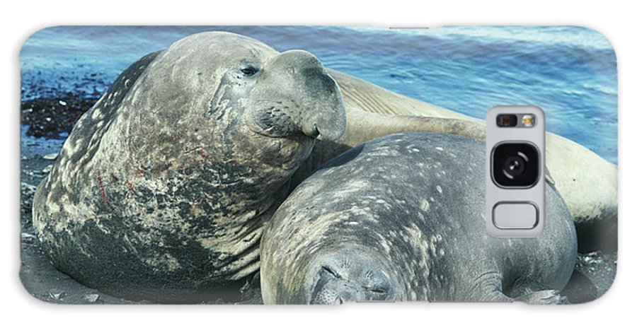 Southern Elephant Seal Galaxy S8 Case featuring the photograph Southern Elephant Seals by Doug Allan