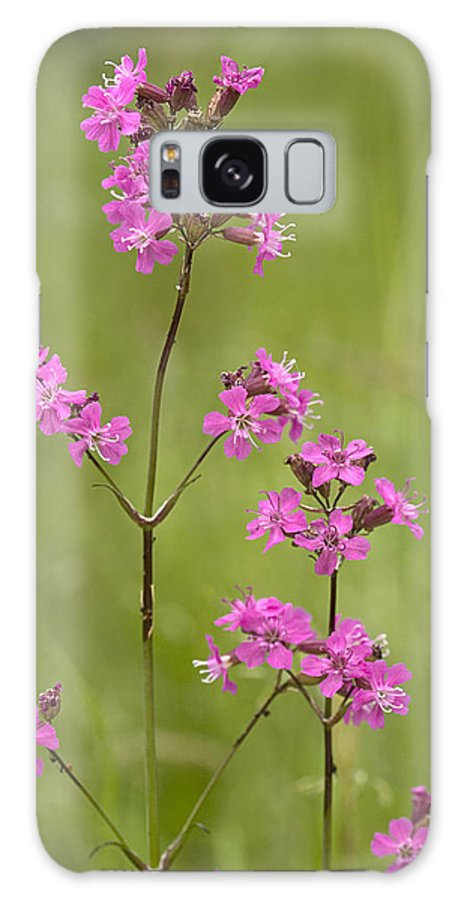 Lychnis Viscaria Galaxy S8 Case featuring the photograph Sticky Catchfly (lychnis Viscaria) by Bob Gibbons