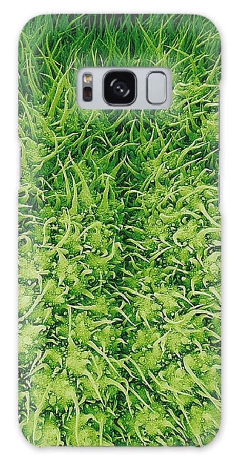 Stinging Nettle Galaxy S8 Case featuring the photograph Stinging Nettle Leaf, Sem by Susumu Nishinaga