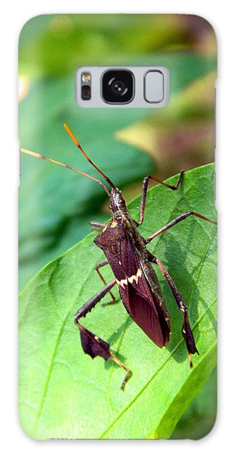 Stink Galaxy S8 Case featuring the photograph Stink Bug by Ester Rogers