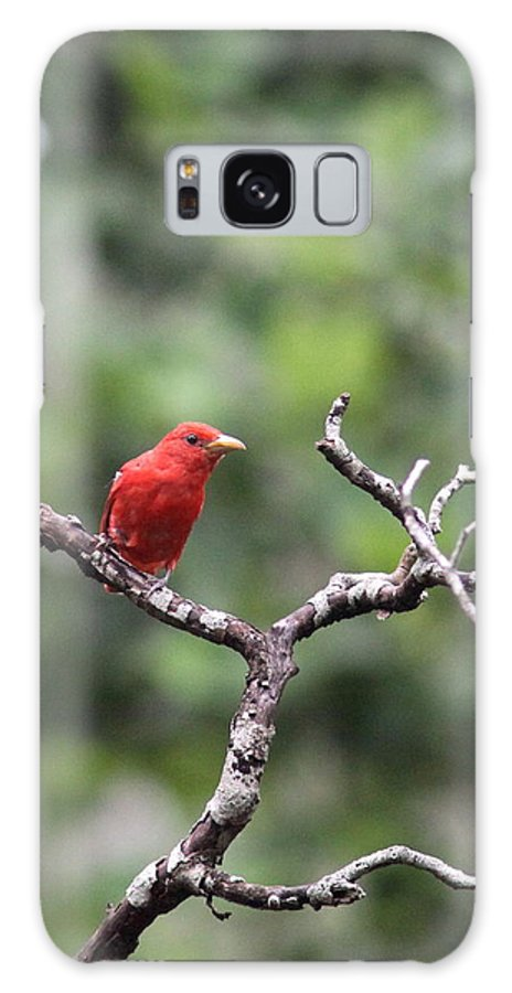 Summer Tanager Galaxy S8 Case featuring the photograph Summer Tanager by Travis Truelove