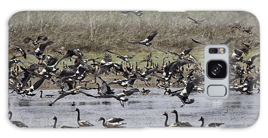Magpie Geese Galaxy S8 Case featuring the photograph The Gathering Place by Douglas Barnard