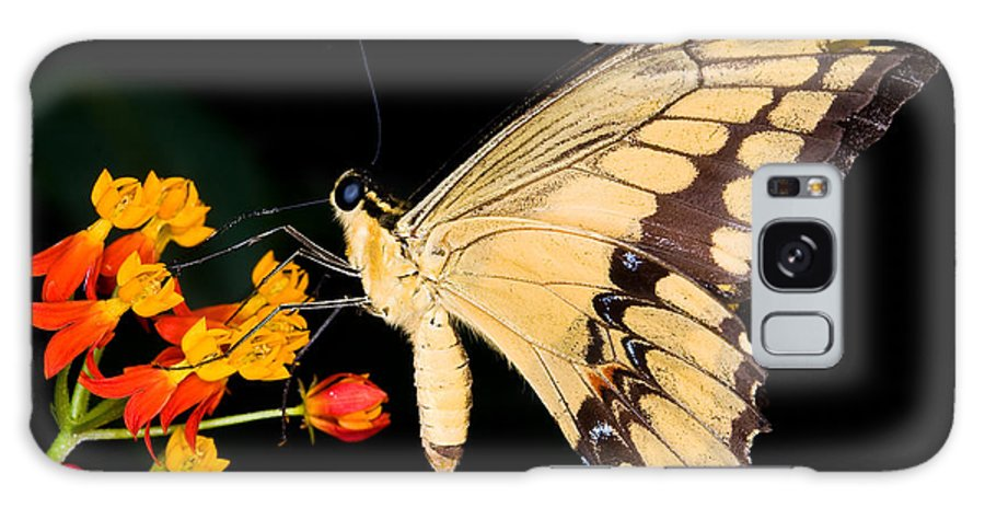 Thoas Swallowtail Butterfly Galaxy S8 Case featuring the photograph Thoas Swallowtail Butterfly by Terry Elniski