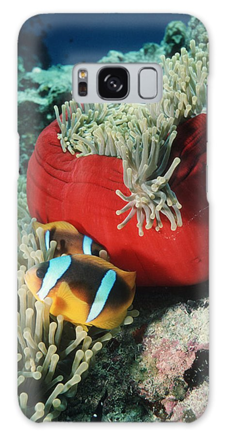 Clownfish Galaxy S8 Case featuring the photograph Twoband Anemonefish by Georgette Douwma