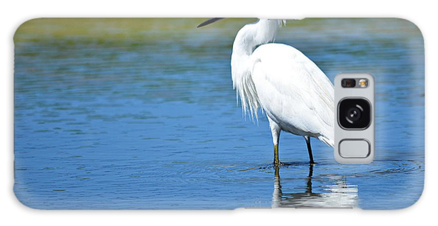 Snowy White Egret Galaxy S8 Case featuring the photograph Wading In Silence by Fraida Gutovich