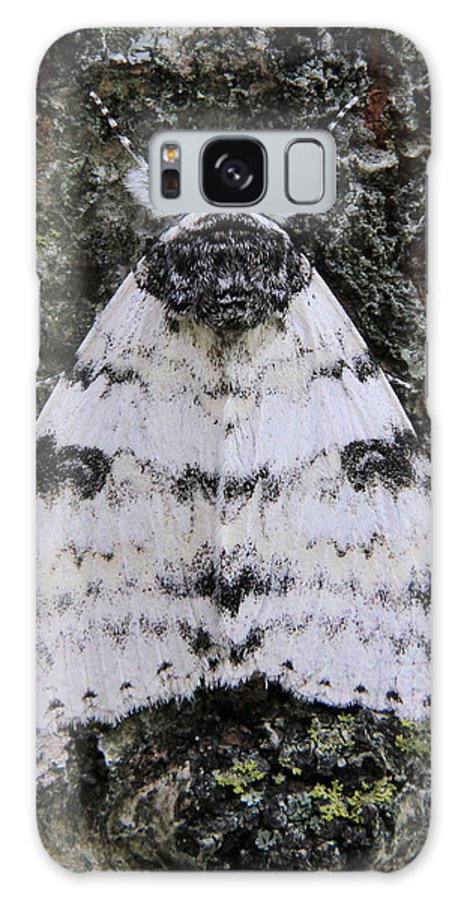 White Underwing Galaxy S8 Case featuring the photograph White Underwing Moth by Doris Potter