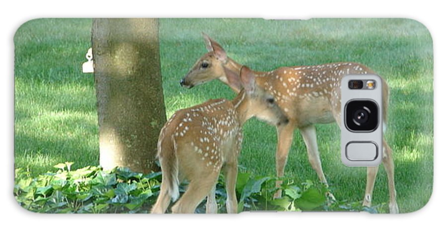 Witetail Deer Galaxy S8 Case featuring the photograph Whitetail Fawns by Randy J Heath