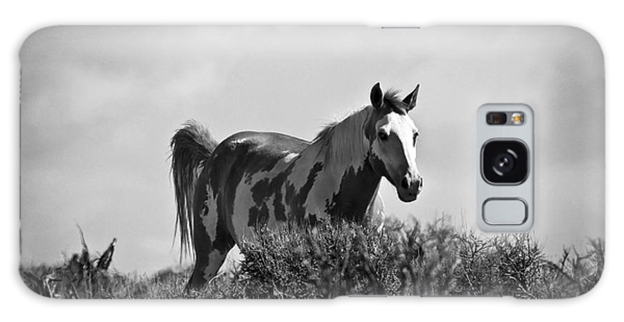 Oregon Wild Horses Galaxy S8 Case featuring the photograph Wild Horse by Steve McKinzie