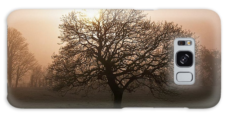 County Donegal Galaxy S8 Case featuring the photograph Winter Tree On A Frosty Morning, County by Gareth McCormack