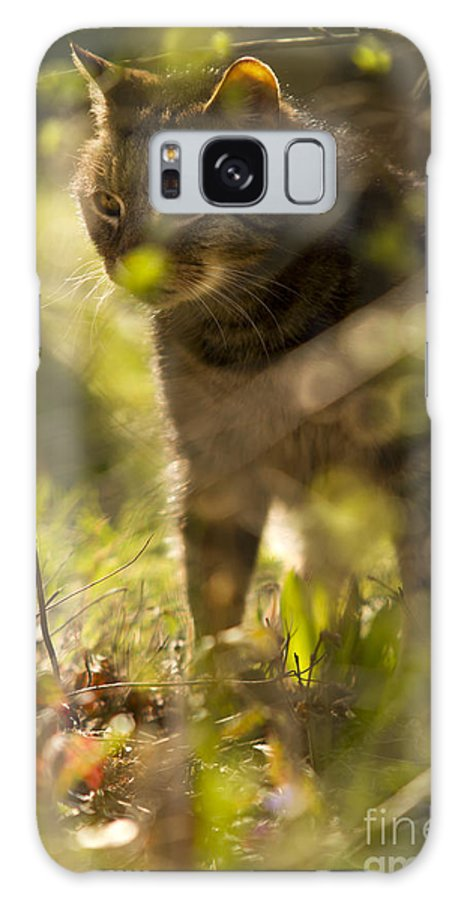 Cat Galaxy S8 Case featuring the photograph Wonky Eyed Tiger by Angel Ciesniarska