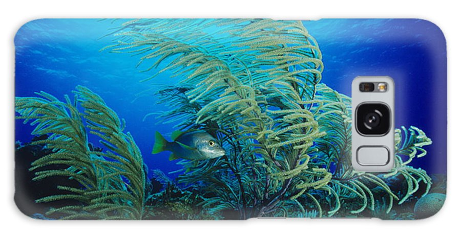 Sea Plume Galaxy S8 Case featuring the photograph Yellow Snapper Fish by Alexis Rosenfeld