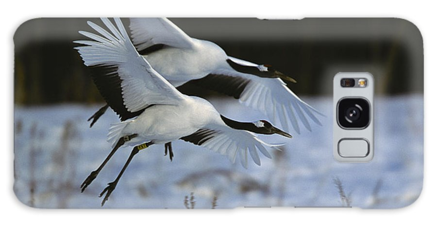 Asia Galaxy S8 Case featuring the photograph A Pair Of Japanese Or Red-crowned by Tim Laman