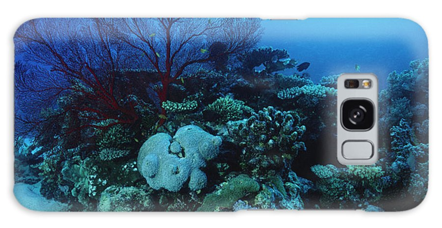 Coral Reef Galaxy S8 Case featuring the photograph Coral Reef by Alexis Rosenfeld