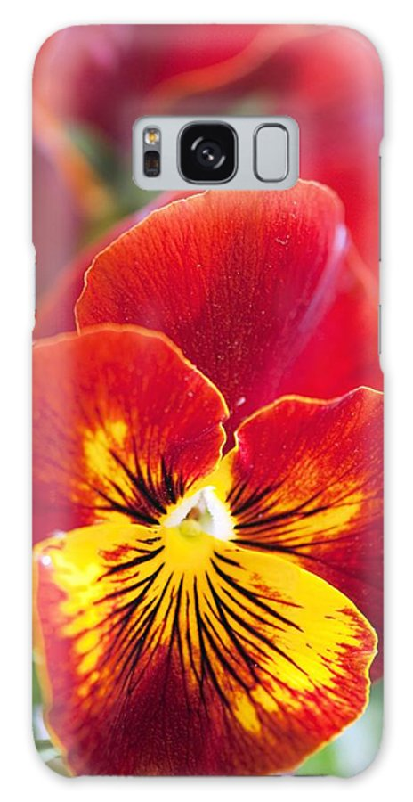 Pansy Galaxy S8 Case featuring the photograph Pansy (viola X Wittrockiana) by Maria Mosolova