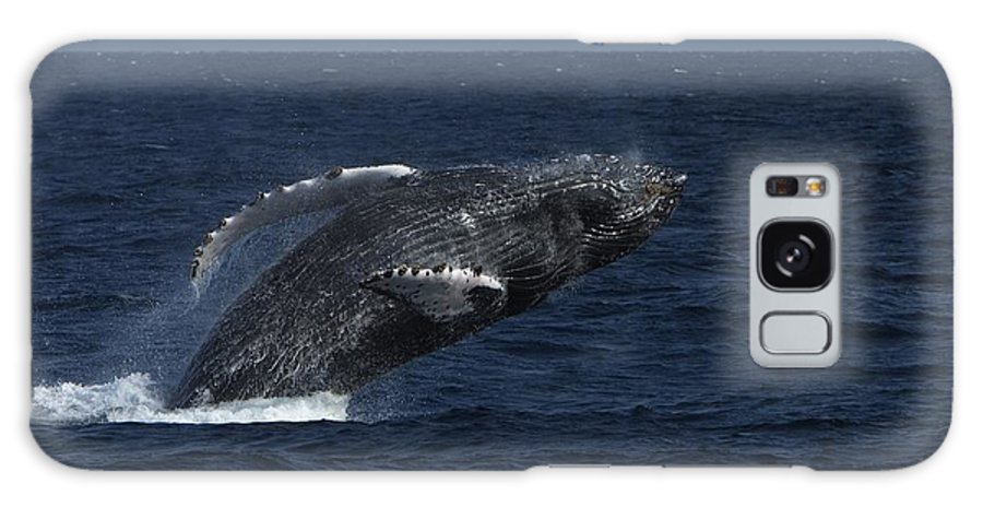North America Galaxy S8 Case featuring the photograph A Breaching Humpback Whale by Ralph Lee Hopkins